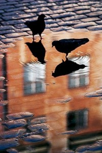 reflected birds
